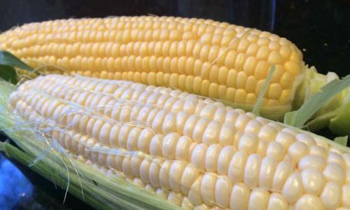 Maize image